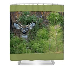 White Tailed Deer Calverton New York Shower Curtain