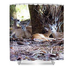 4 Wild Deer Shower Curtain