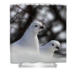 Willow Ptarmigan Shower Curtain