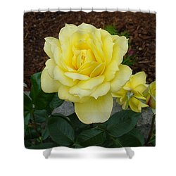 4 Yellow Roses Shower Curtain