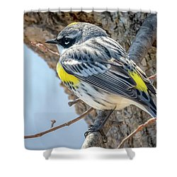 Shower Curtain featuring the photograph Yellow-rumped Warbler by Ricky L Jones