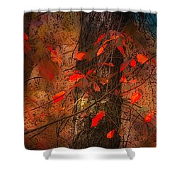 4019 Shower Curtain by Peter Holme III