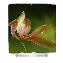 4188 Shower Curtain by Peter Holme III