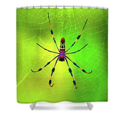 42- Come Closer Shower Curtain by Joseph Keane