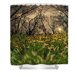 4209 Shower Curtain by Peter Holme III