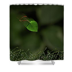 Shower Curtain featuring the photograph 4361 by Peter Holme III