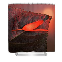 Shower Curtain featuring the photograph 4366 by Peter Holme III