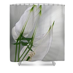 Shower Curtain featuring the photograph 4425 by Peter Holme III