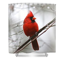4772-001 - Northern Cardinal Shower Curtain