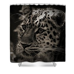 Amur Leopard Shower Curtain by Martin Newman