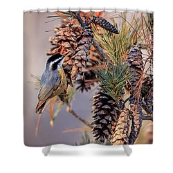 Shower Curtain featuring the photograph Black-capped Chickadee by Peter Lakomy
