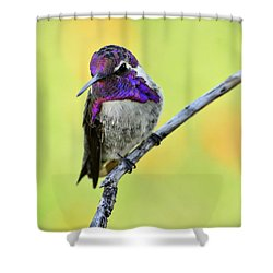 Costas Hummingbird  Shower Curtain by Saija  Lehtonen