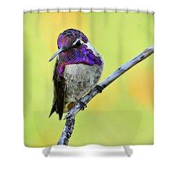 Costas Hummingbird  Shower Curtain