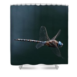 Fly By Shower Curtain