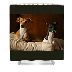 Italian Greyhounds Shower Curtain by Angela Rath