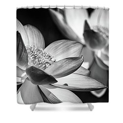 Lotus Black And White Art Series Shower Curtain