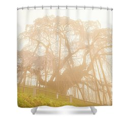 Shower Curtain featuring the photograph Miharu Takizakura Weeping Cherry06 by Tatsuya Atarashi