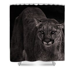 Mountain Lion  Shower Curtain by Brian Cross