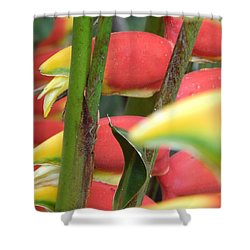 Shower Curtain featuring the photograph Natural  by Beto Machado