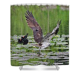 Osprey Fishing Shower Curtain