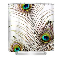 Peacock Feathers Shower Curtain by Mary Van de Ven - Printscapes