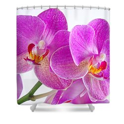 Shower Curtain featuring the photograph Pink Orchid by Dariusz Gudowicz