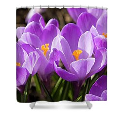 Purple Crocuses Shower Curtain by Irina Afonskaya