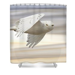 Snowy Owl In Flight Shower Curtain by Mark Duffy
