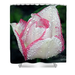 Shower Curtain featuring the photograph Tulip by Elvira Ladocki