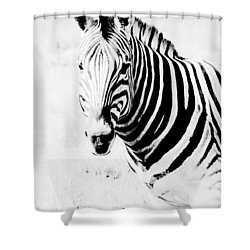 Shower Curtain featuring the photograph Zebra Art by Werner Lehmann