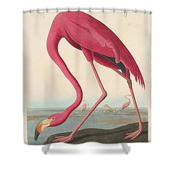 American Flamingo Shower Curtain
