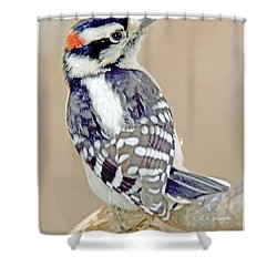 Shower Curtain featuring the photograph Downy Woodpecker Male On Tree Limb by A Gurmankin