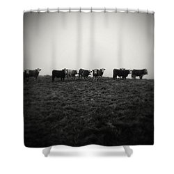 Livestock Shower Curtain by Les Cunliffe