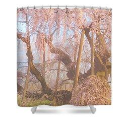 Shower Curtain featuring the photograph Miharu Takizakura Weeping Cherry07 by Tatsuya Atarashi