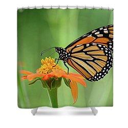 Monarch Shower Curtain by Ronda Ryan
