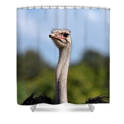 Ostrich Shower Curtain George Atsametakis