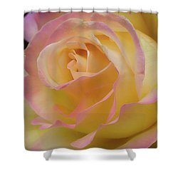 Rose Beauty Shower Curtain by Shirley Mitchell