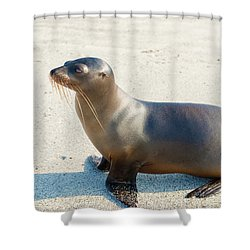 Sea Lion In Galapagos Islands Shower Curtain by Marek Poplawski