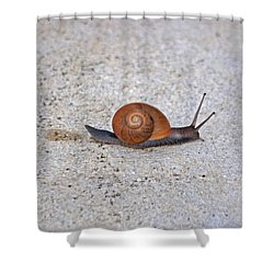 Shower Curtain featuring the photograph 6- Snail by Joseph Keane
