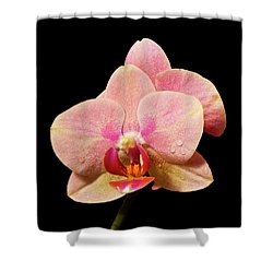 Stunning Orchids Shower Curtain