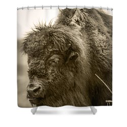 #6389 - The Traveler Shower Curtain