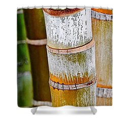 Bamboo Palm Shower Curtain by Werner Lehmann