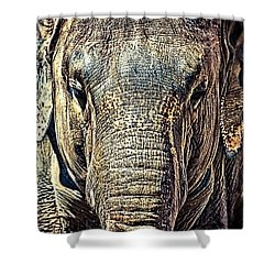 Elephant Collection Shower Curtain
