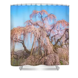 Shower Curtain featuring the photograph Miharu Takizakura Weeping Cherry29 by Tatsuya Atarashi