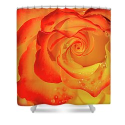 Rose Beauty Shower Curtain