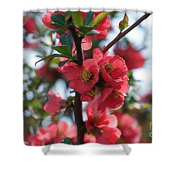 Tree Blossoms Shower Curtain by Elvira Ladocki