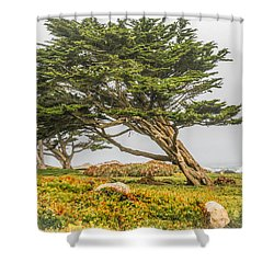 #7803 - Monterey, California Shower Curtain