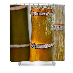 Shower Curtain featuring the photograph Bamboo Palm by Werner Lehmann