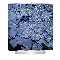 Blue Plumbago Shower Curtain by Elvira Ladocki