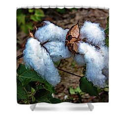 8 Bolls Of Cotton  Shower Curtain